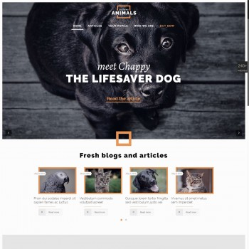 Charity organization, Blog WordPress template