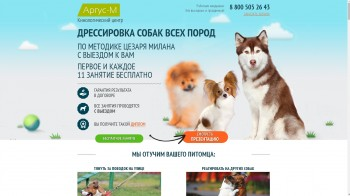 Business, Animals HTML template